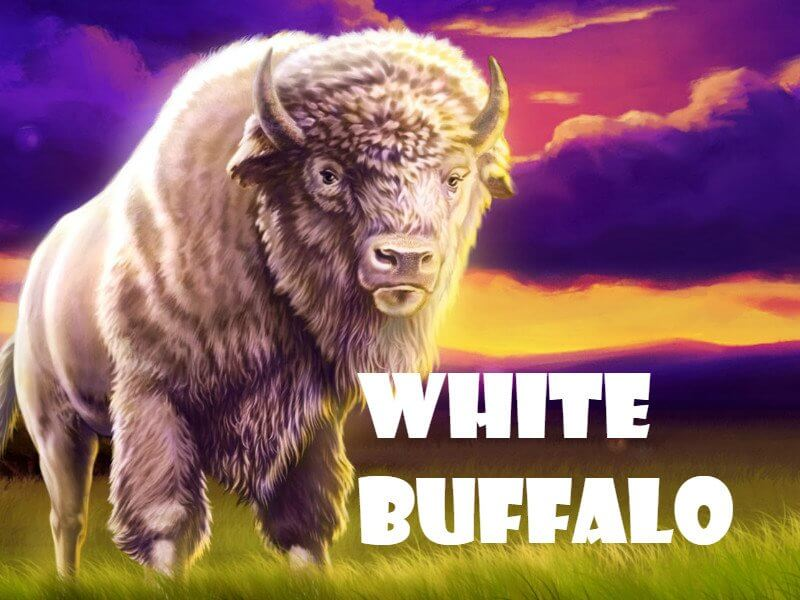 Jackpots Are A Great White Buffalo!